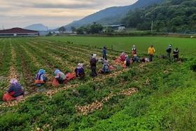 일손부족 농가 농업인력지원