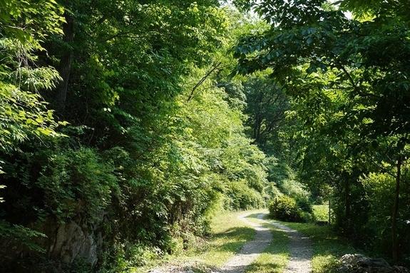 [완주산책]완주 여름 숲을 걷다
