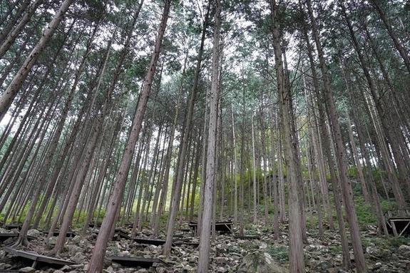 [완주산책]상관 편백나무 숲길을 걷다